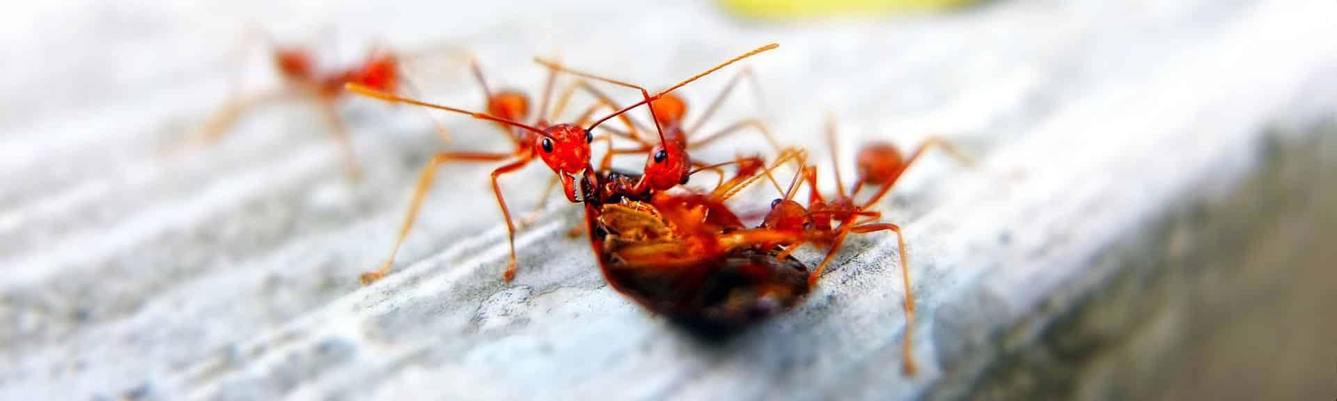 fourmis algos 3D pest control
