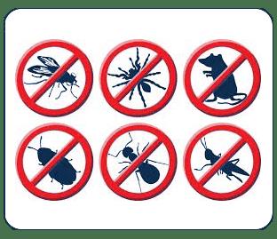 Plan-lutte-contre-les-nuisibles-algo3D-pest-control-75-94