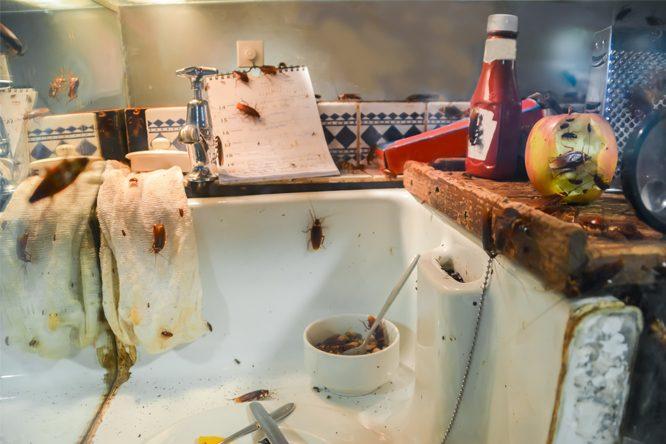 cafard-blattes-cuisine-algo3d-pest-control-desinsectisation-75-77-78-91-92-93-94-paris