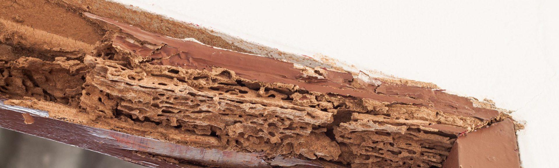 traitement contre les insectes xylophages ALGO3D 75 paris 77 78 91 92 93 94 95 bois de charpente insecte du bois vers de bois