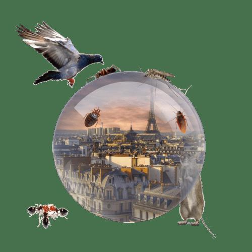 Anti-Nuisibles Paris